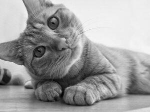 Indoor Healthy Cat Food
